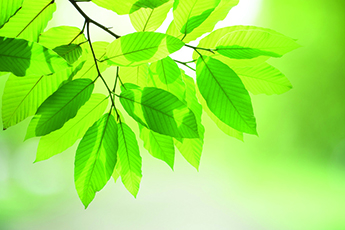 Green leaf on blurred greenery background in garden with copy space using as background for design.